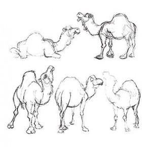 sk_camels